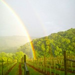 Rainbow Over The Alder Vineyard