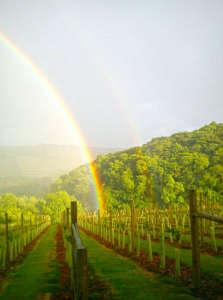 Rainbow Over The Alder Vineyard
