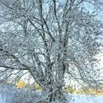 Lobhill Farmhouse Woodland in Winter