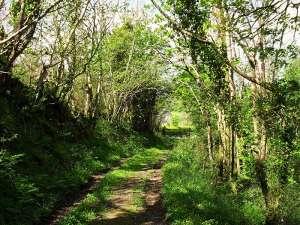 Lobhill Farmhouse Woodland