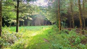 Woodland photo at Lobhill Farmhouse Estate by Chris Farmer