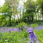 lobhill farmhouse bluebell walk